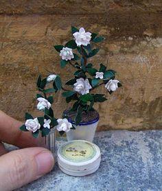 Tutorial: Gardenias