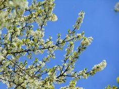 Bloesem in de bomen,Lente !!