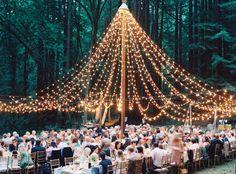Summer evening forest soirée, light canopy