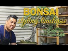 How to Wire a Bonsai Tree Branch - YouTube