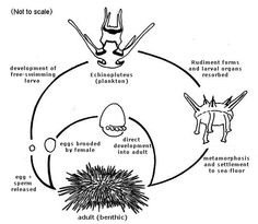 starfish anatomy worksheet - Google Search | STEM ...