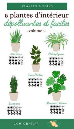 5 depolluting indoor plants – vol. 1 – little girl rooms Ficus Elastica, Garden Plants, Indoor Plants, Eco Garden, Indoor Gardening, Decoration Plante, Plantar, Green Life, Plant Decor