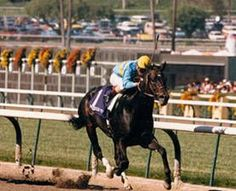 Smile(1982)In Reality- Sunny Smile By Boldnesian. 4x4 To War Relic, 4x5 To Discovery. 27 Starts 14 Wins 4 Seconds 3 Thirds. $1,664,027. Won In Reality S, Dr Fager S, Criterium S, Arlington Classic S(G1), Fairmount Derby(G3), Carry Back S, BC Sprint(G1), Equipoise Mile H(G3), Canterbury Cup H, 2nd BC Sprint(G1), Sheridan S(G2), Tropical Park BCH.: