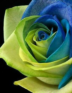 Green Blue Rose.