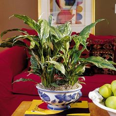 Like the blue bowl, and the plant.