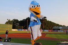 Splash, Myrtle Beach Pelicans mascot; Class A-Advanced Carolina League.
