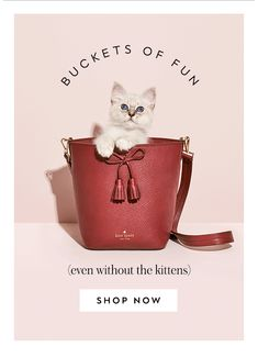 buckets of fun (even without the kittens) SHOP NOW