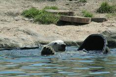 spelen in het water:)