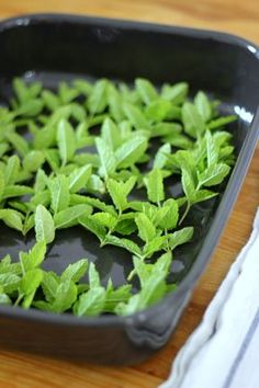 Tea Infusers for Perfect Cups of Tea how to dry mint leaves for peppermint tea Peppermint Herb, Peppermint Plants, Peppermint Leaves, Drying Mint Leaves, Lavender Leaves, Green Leaves, Mint Recipes, Tea Recipes, Growing Mint