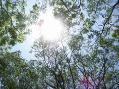 Look up! There is a scenic views of trees and sun shines.