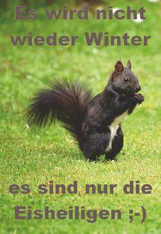 Kangaroo, Winter, Animals, Cats, Animales, Baby Bjorn, Winter Time, Animaux, Animal