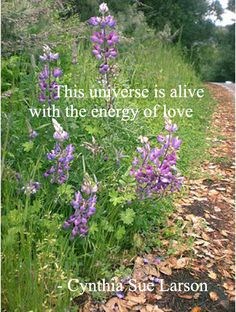 """""""This universe is alive with the energy of love"""" - Cynthia Sue Larson"""