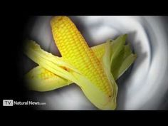 GMOs explained - a public service announcement from the Health Ranger / Natural News - http://health.bruisedonion.com/299/gmos-explained-a-public-service-announcement-from-the-health-ranger-natural-news/