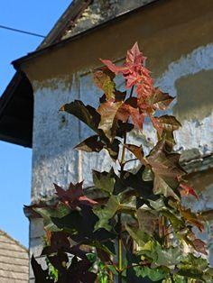 První podzimní 2014 Bird, Outdoor Decor, House, Painting, Home Decor, Decoration Home, Home, Room Decor, Birds