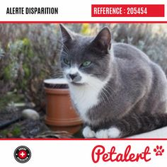 27.01.2020 / Chat / FroidevilleVaud / Suisse Cats, Switzerland, Animaux, Gatos, Cat, Kitty, Kitty Cats