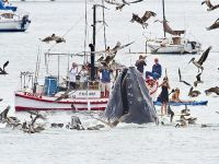 Boaters, paddlers enjoy amazingly close humpback whale encounter at Avila Beach.  Right in my own back yard!!!