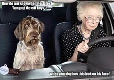 #Funny dog pictures http://www.improfitnow.com/category/work-from-home-2/