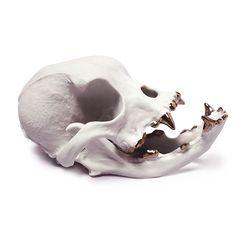 Porcelain Bulldog Skull on AHAlife