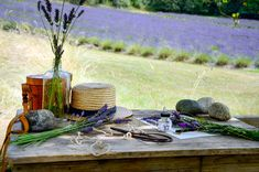 The Anatomy of Lavender Lavender Crafts, Lavender Flowers, Lavender Plants For Sale, Lavandula Angustifolia, Plant Sale, Flower Shape, First They Came, Shades Of Purple, Natural World