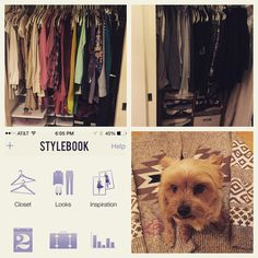 Closet is finally organized and categorized thanks to a handy app and my little helper! #babyisadog #stylebookapp