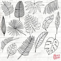 Tropical Leaf Clipart - 14 Hand Drawn Leaf Cliparts - Leaf Logo Art - Tropical Logo Elements - Tropical Illustration - Get some adorable hand drawn tropical leaf clipart, perfect for logos, i Leaf Drawing, Drawing Hands, Plant Drawing, Drawing Flowers, Flower Drawings, Doodle Flowers, Hand Drawn Flowers, Flower Doodles, Art Flowers