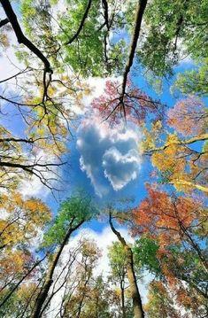 art fotografia 25 herausragende Fotos, die un - art Beautiful Nature Wallpaper, Beautiful Landscapes, Landscape Photography, Nature Photography, Happy Photography, Heart In Nature, Nature Tree, Art Nature, Colorful Trees