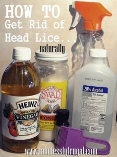 How To Get Rid of Head Lice {Natural Remedy for Hair and Furniture}