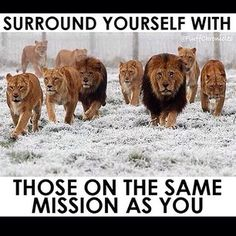 You become the average of the 5 people you spend time with the most.