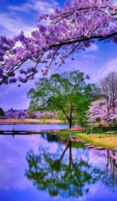 """""""Hayırlısı"""" Ne güzel kelime! Önlem alınmış, Mücadele edilmiş, Gerisi en yüce makama havale edilmiş... Nature Landscape, Spring Landscape, Nature Nature, Wild Nature, Beautiful Scenery, Beautiful Images, Simply Beautiful, Beautiful Landscapes, Beautiful World"""