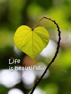 Life is so beautiful enjoy every moment....... :)