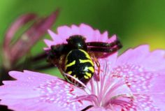 Black and Yellow Spider Sitting on a Flower - Public Domain Photos, Free Images for Commercial Use Public Domain, Black N Yellow, Free Images, Spider, Insects, Bee, Flowers, Commercial, Inspiration