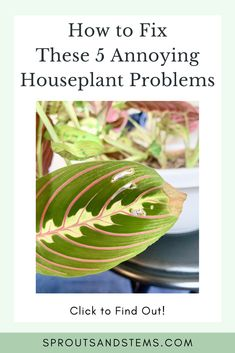 Air Plants, Indoor Plants, Prayer Plant, Low Light Plants, House Plant Care, Neem Oil, Snake Plant, New Growth, Houseplant