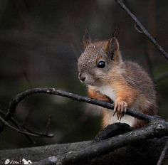 Squirrel symbolism represents saving for the future.  When God speaks to you the message received can be specific on what that symbol represents to you.