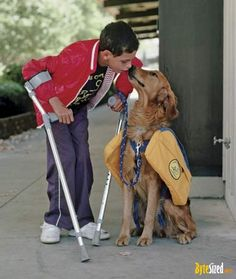Get Better Help Dogs And Kids I Love All