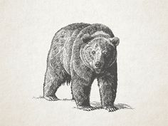 Grizzly-vector-...   #illustration #inspiration #design