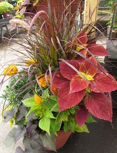 The perfect fall container garden. . .