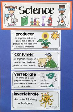 Science Vocabulary Word Wall Cards & Interactive Notebook Inserts - This resource features 300 science vocabulary terms with definitions and illustrated examples. The words are presented in two different formats, word wall card size and interactive notebook size, so you are able to use this one resource for a variety of classroom objectives.