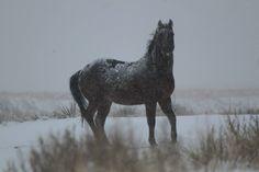 Frozen Pony