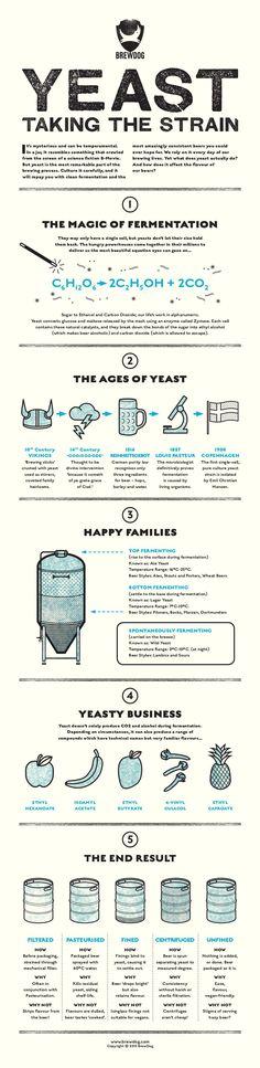 YEAST: TAKING THE STRAIN - BrewDog Beer Infographic