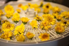 Using flowers for medicinal purposes is a fun way to bring the natural world into our medicine cabinets. Flowers like echinacea, calendula, nasturtium, lavender… Herbal Remedies, Natural Remedies, How To Make Magic, Fruit Preserves, Dehydrated Food, Calendula, Fruits And Veggies, Gardening Tips, Harvest