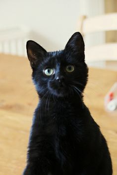 """Black cat. Such a cutie..looks like my other black cat """"Mister Bo Jangles""""... """"Bo""""...green eyes.."""