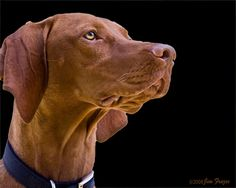 Rioghan the Search Dog by SARhounds, via Flickr