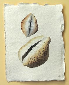Sea shell original watercolour painting beach ocean coastal collection. £30.00, via Etsy.