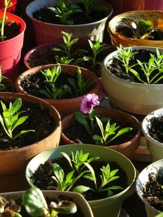 Container garden planting and care instructions  - healthy soil recipe: 1/3 garden soil, 1/3 quality compost, and 1/3 peat moss (or the more ecological alternative, coconut coir).