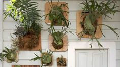 Mount them on a wall | Foliage needn't be an afterthought. Follow these tips to make plants the stars of the room
