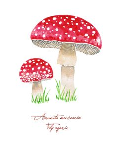 Fly agaric by Endless-Ness.deviantart.com on @DeviantArt