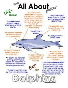 My All About Dolphins Book / Workbook Ocean Animal Unit Study - Fun Graphics - Ideas of Fun Graphics - My All About Dolphins Book / Workbook Ocean Animal Unit Study All About Dolphins, Dolphins For Kids, Animal Facts For Kids, Fun Facts For Kids, Dolphin Facts For Kids, Dolphin Craft, Ocean Activities, Learning Activities, Preschool Lessons