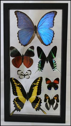7 Specie Butterfly Frame Wall Décor Framed Butterflies Wedding Anniversary Gifts Wall Art Trendy Office Decor Gifts for Home by timelessdesigns07 on Etsy