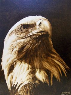 eagle pyrography   The Eagle by Stefania Mante