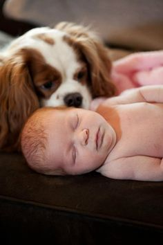 Baby and Cavalier King Charles Spaniel.